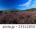 富士山 ラベンダー 23312850