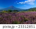 富士山 ラベンダー 23312851