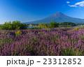 富士山 ラベンダー 23312852