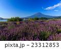 富士山 ラベンダー 23312853