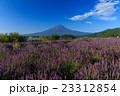 富士山 ラベンダー 23312854