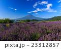 富士山 ラベンダー 23312857