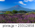 富士山 ラベンダー 23312858
