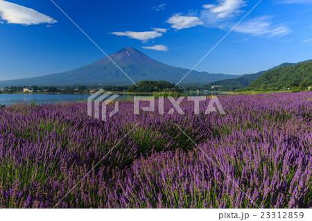 富士山 ラベンダー 23312859