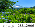 富士山 あじさい 23312906