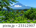 富士山 あじさい 23312907