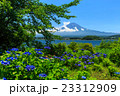 富士山 あじさい 23312909