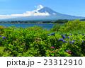 富士山 あじさい 23312910