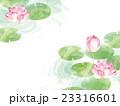蓮の花 23316601