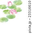 蓮の花 23316610