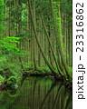 牛渡川 川 森林の写真 23316862