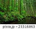 牛渡川 川 森林の写真 23316863