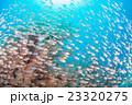 八重干瀬ダイビング 23320275