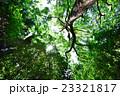 新緑 木 森林の写真 23321817