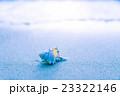 渚の貝殻 23322146