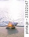 渚の貝殻 23322147