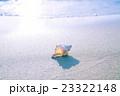 渚の貝殻 23322148