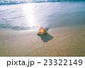 渚の貝殻 23322149