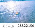 渚の貝殻 23322150