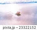 渚の貝殻 23322152