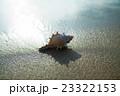 渚の貝殻 23322153