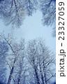 ウィンター ウインター 冬の写真 23327059