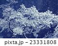 ウィンター ウインター 冬の写真 23331808