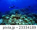ダイバー 珊瑚 珊瑚礁の写真 23334189