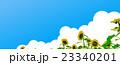 ひまわり畑 23340201