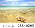 オカガニ 吉野海岸 海の写真 23340295