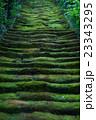 苔 クローズアップ 階段の写真 23343295