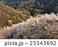 陸郷の桜 23343692