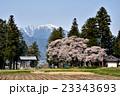 安曇野の桜 23343693