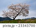 常念岳と桜 23343700
