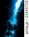 宮古島ダイビング 23345728