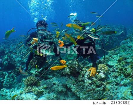 体験ダイビングで餌付け2 23350897