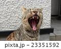 吠える猫 23351592