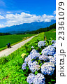 初夏の農村風景 (67) 23361079