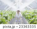 いちご農家の女性 23363335