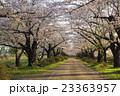 北上展勝地の桜並木 岩手県北上市 23363957