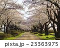 北上展勝地の桜並木 岩手県北上市 23363975