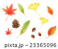 松ぼっくり どんぐり 秋のイラスト 23365096