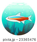 熱帯魚 魚 カージナルテトラのイラスト 23365476