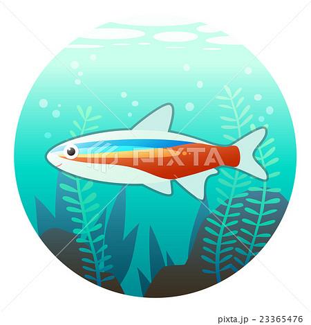 熱帯魚アクアリウムのイラストのイラスト素材 23365476 Pixta