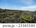 伊豆大島 火山 三原山の写真 23365580