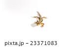 ニホンカナヘビ 23371083