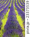 フラワー 花 ラベンダーの写真 23373539