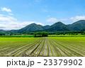 初夏の畑作風景 (旭川市) 23379902