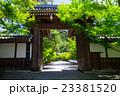 京都 永観堂 新緑   23381520