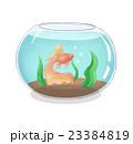 金魚と金魚鉢 23384819
